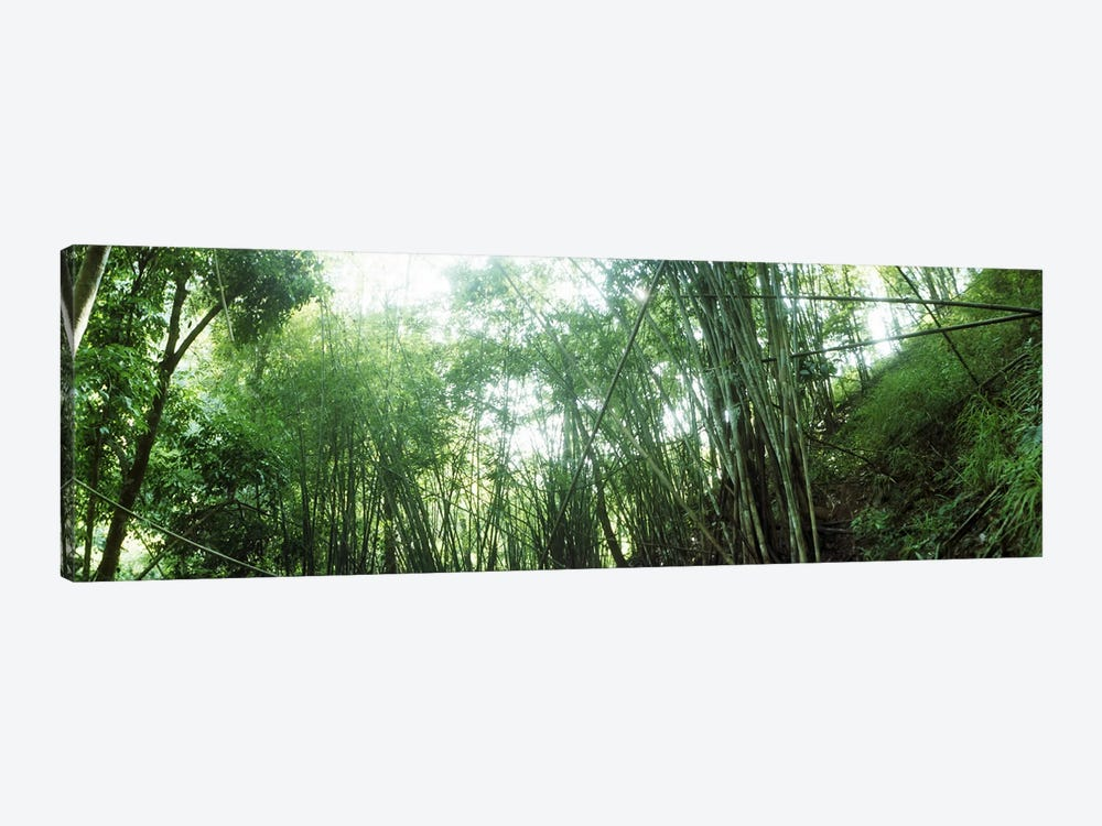 Bamboo forest, Chiang Mai, Thailand #2 by Panoramic Images 1-piece Canvas Artwork