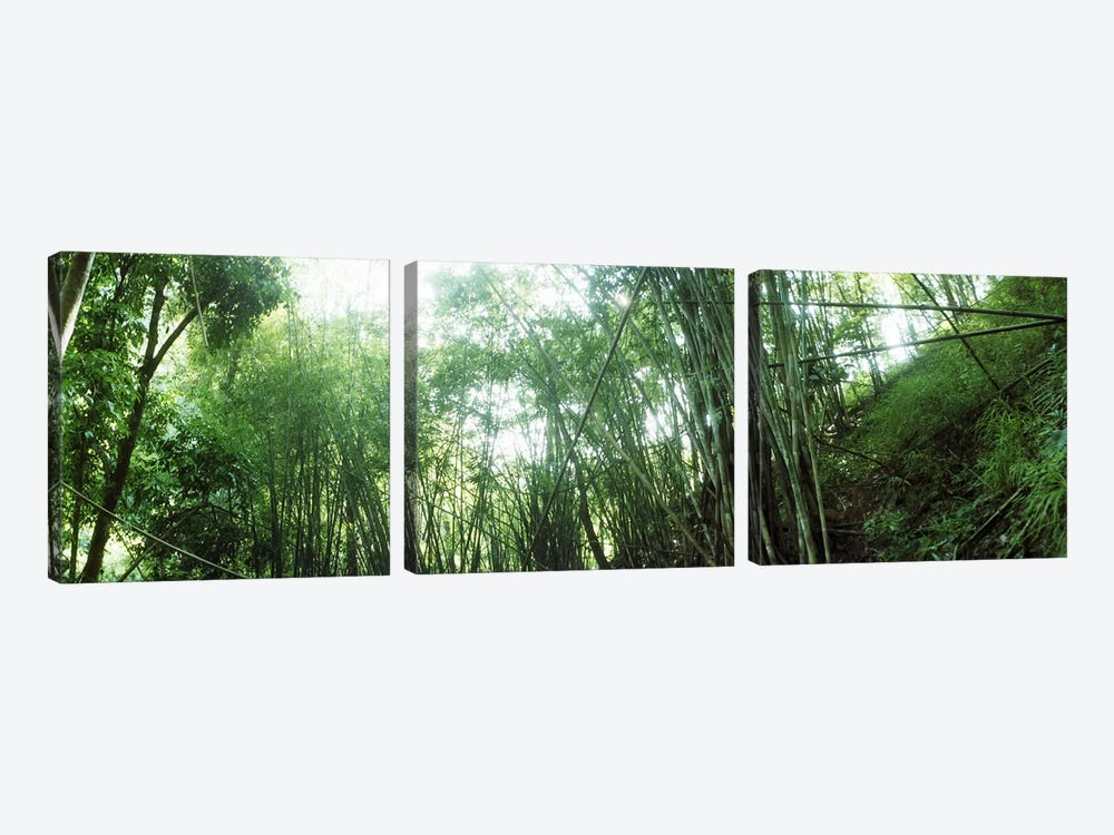 Bamboo forest, Chiang Mai, Thailand #2 by Panoramic Images 3-piece Canvas Artwork