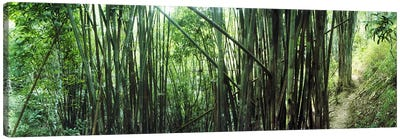 Bamboo forest, Chiang Mai, Thailand #3 Canvas Print #PIM10618
