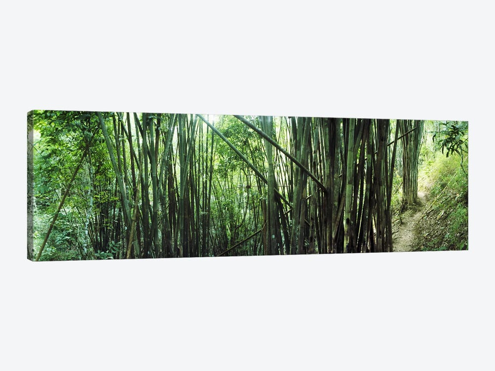 Bamboo forest, Chiang Mai, Thailand #3 by Panoramic Images 1-piece Canvas Art Print