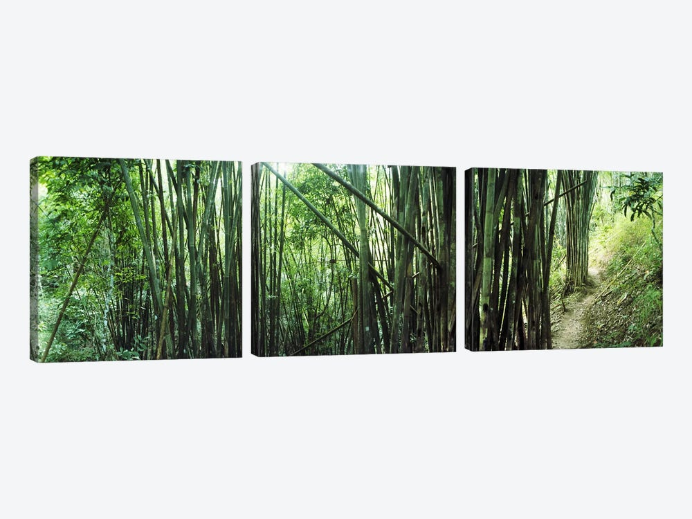 Bamboo forest, Chiang Mai, Thailand #3 by Panoramic Images 3-piece Canvas Art Print