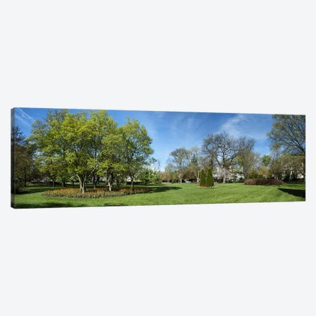 Tulips with trees at Sherwood Gardens, Baltimore, Maryland, USA Canvas Print #PIM10689} by Panoramic Images Canvas Wall Art