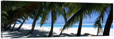 Palm trees on the beach, Aitutaki, Cook Islands Canvas Art Print