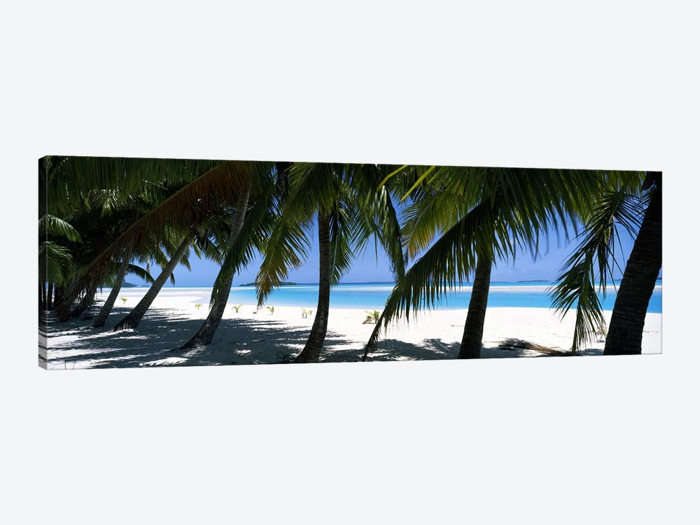 Palm trees on the beach, Aitutaki, Cook Islands by Panoramic Images 1-piece Canvas Wall Art