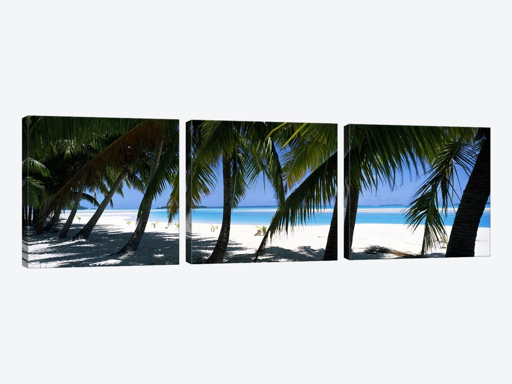 Palm trees on the beach, Aitutaki, Cook Islands by Panoramic Images 3-piece Canvas Artwork
