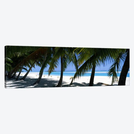 Palm trees on the beach, Aitutaki, Cook Islands Canvas Print #PIM10697} by Panoramic Images Canvas Art