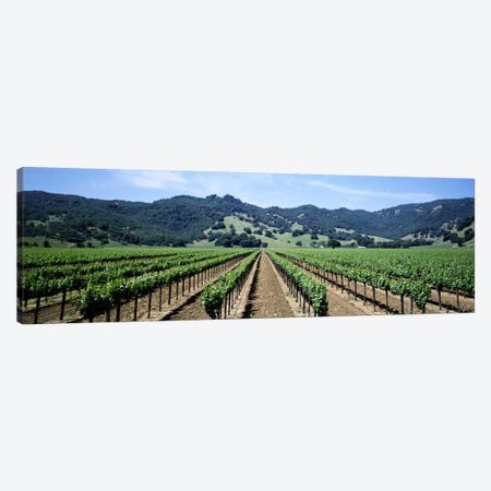 Vineyard Landscape, Hopland, Mendocino County, California, USA Canvas Print #PIM1071} by Panoramic Images Canvas Wall Art