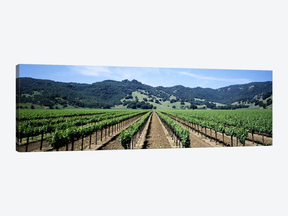 Vineyard Landscape, Hopland, Mendocino County, California, USA 1-piece Canvas Wall Art