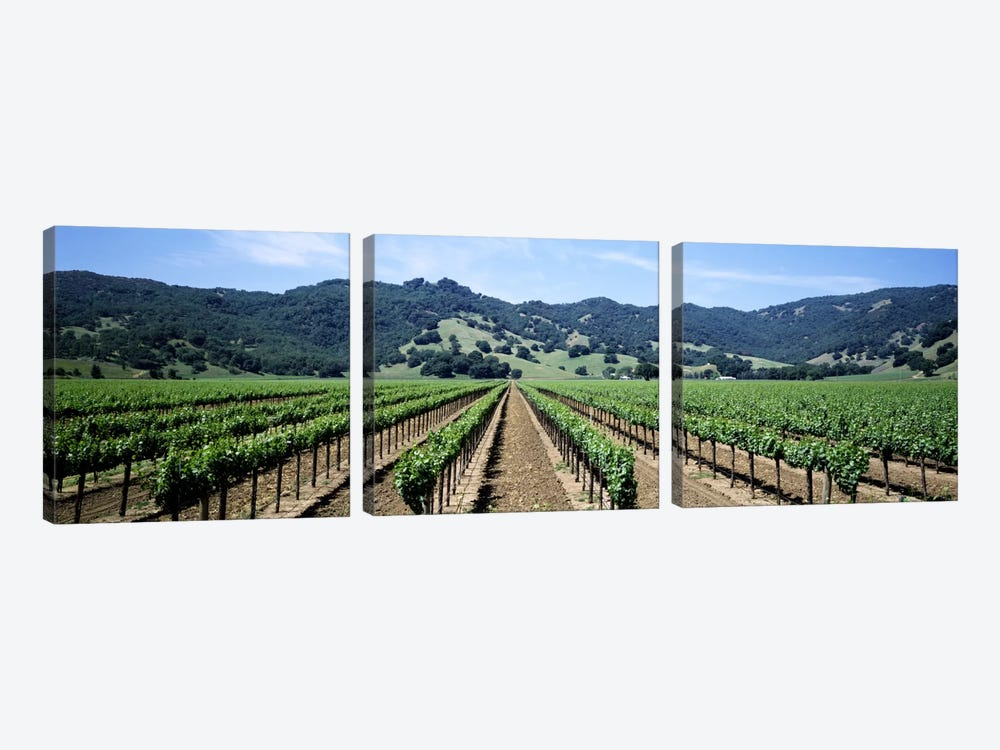 Vineyard Landscape, Hopland, Mendocino County, California, USA by Panoramic Images 3-piece Canvas Wall Art