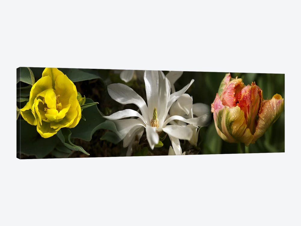 Close-up of flowers by Panoramic Images 1-piece Canvas Art
