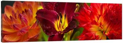 Close-up of orange flowers Canvas Print #PIM10730