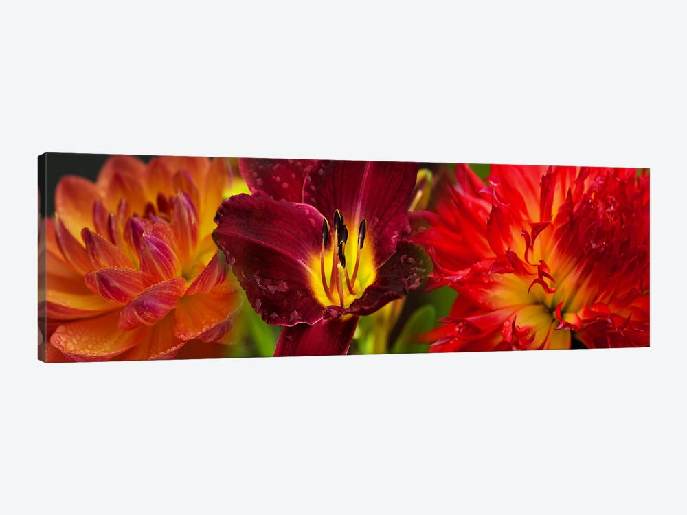 Close-up of orange flowers by Panoramic Images 1-piece Canvas Art