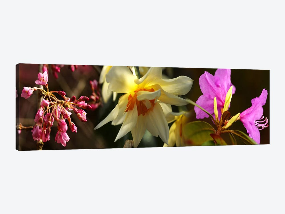 Close-up of flowers by Panoramic Images 1-piece Canvas Artwork