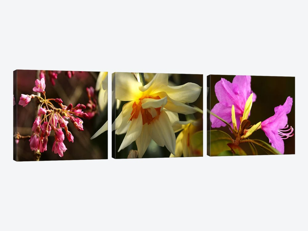 Close-up of flowers by Panoramic Images 3-piece Canvas Artwork