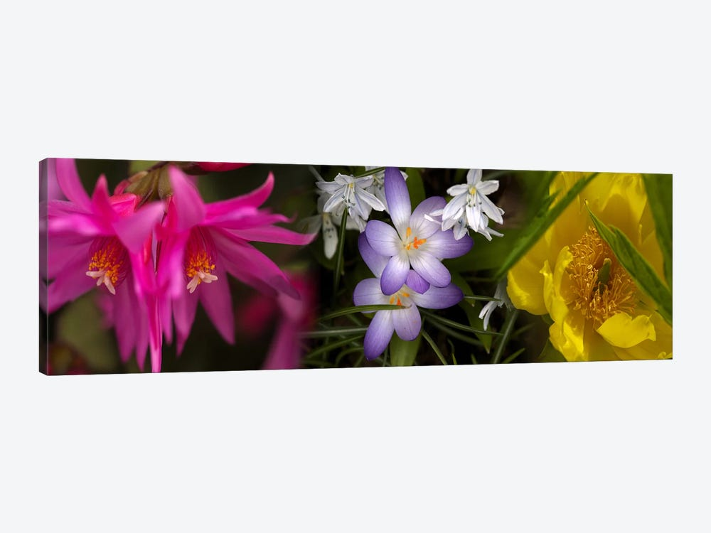 Flowers in pastel colors by Panoramic Images 1-piece Canvas Print