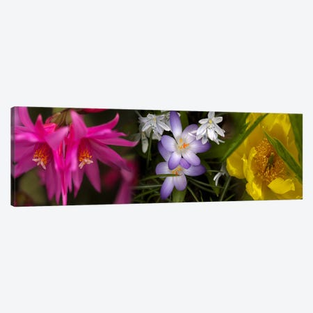 Flowers in pastel colors 3-Piece Canvas #PIM10737} by Panoramic Images Canvas Art Print