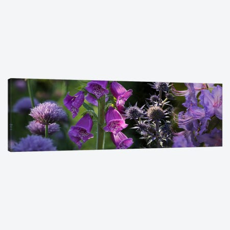 Close-up of purple flowers Canvas Print #PIM10740} by Panoramic Images Art Print