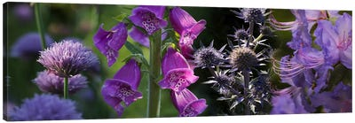 Close-up of purple flowers Canvas Print #PIM10740