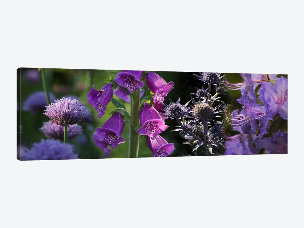 Close-up of purple flowers by Panoramic Images 1-piece Canvas Print