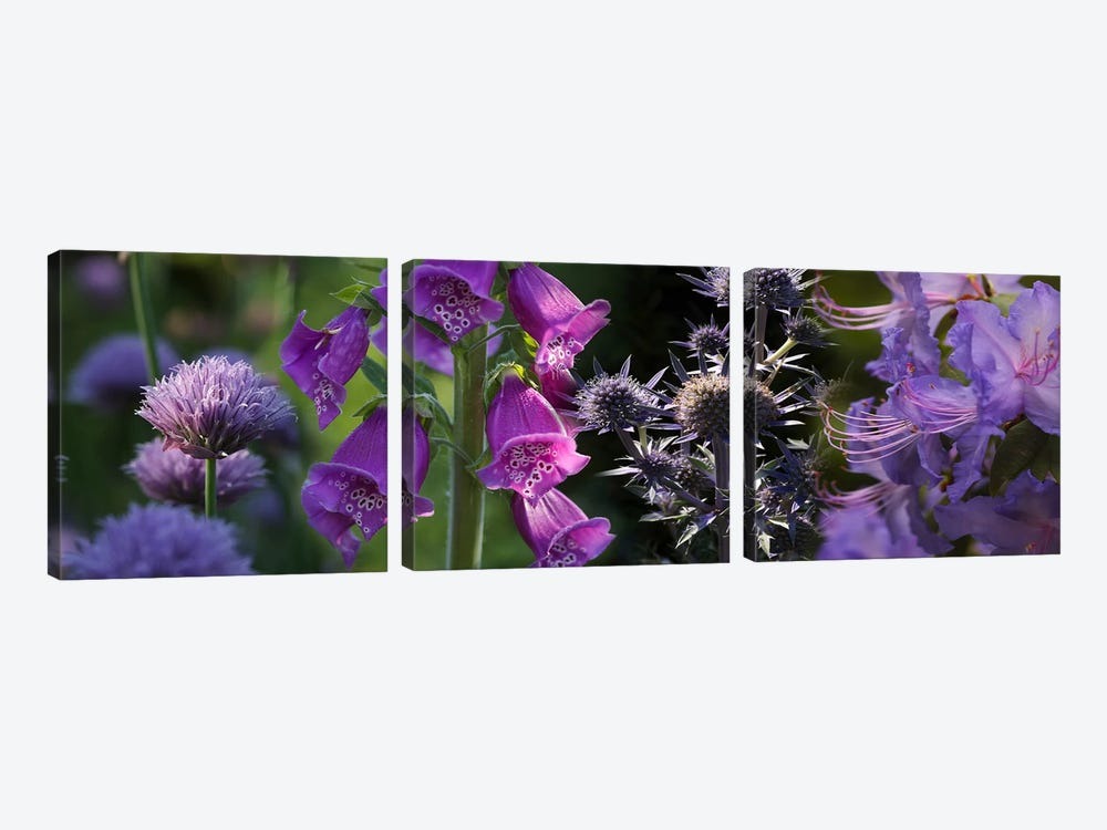 Close-up of purple flowers by Panoramic Images 3-piece Art Print