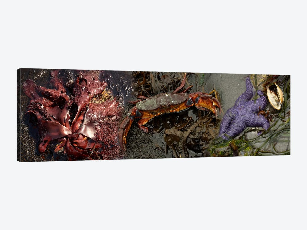 Sea critters by Panoramic Images 1-piece Canvas Wall Art