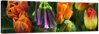 Close-up of orange & purple flowers Canvas Art Print