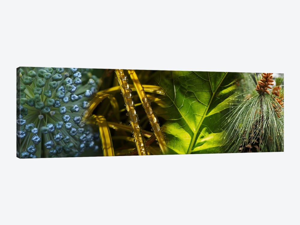 Leaves with rain drops by Panoramic Images 1-piece Canvas Artwork