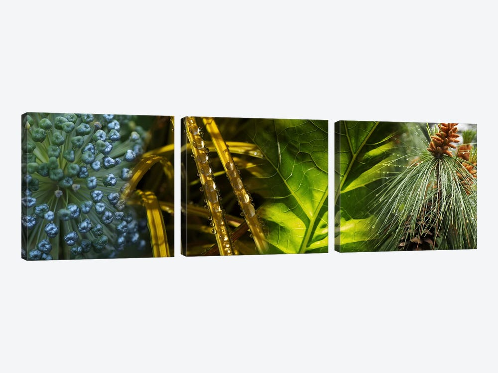 Leaves with rain drops by Panoramic Images 3-piece Canvas Artwork