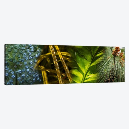 Leaves with rain drops Canvas Print #PIM10745} by Panoramic Images Canvas Artwork