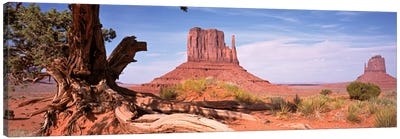 West And East Mitten Buttes (The Mittens) With A Gnarled Tree Trunk In The Foreground, Monument Valley, Navajo Nation, USA Canvas Print #PIM1078