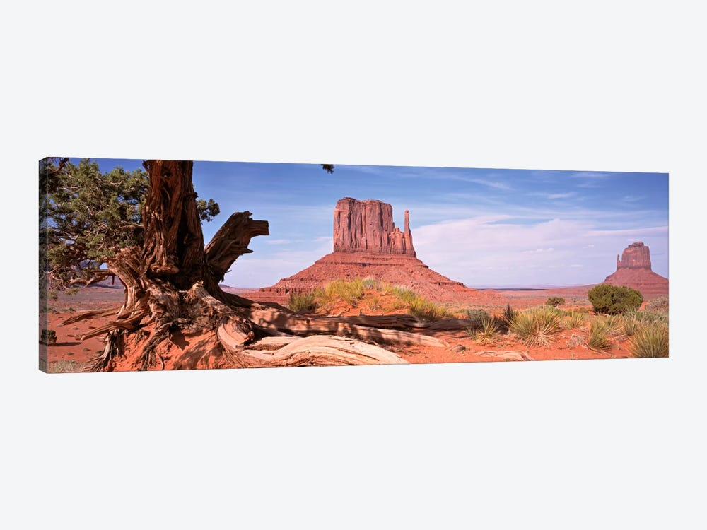 West And East Mitten Buttes (The Mittens) With A Gnarled Tree Trunk In The Foreground, Monument Valley, Navajo Nation, USA by Panoramic Images 1-piece Canvas Print