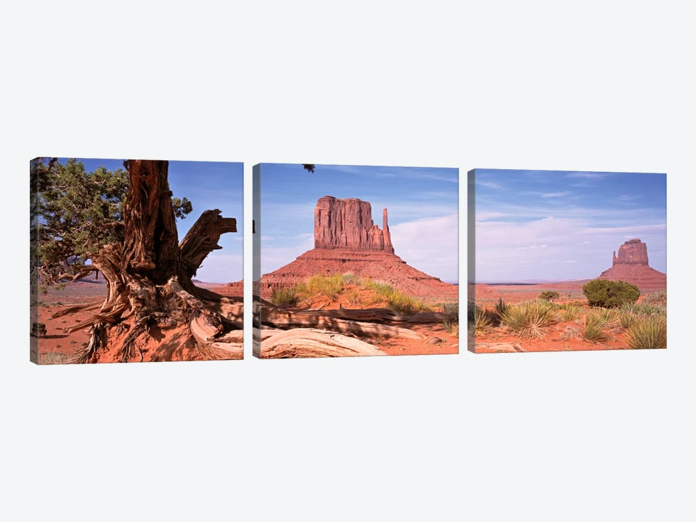 West And East Mitten Buttes (The Mittens) With A Gnarled Tree Trunk In The Foreground, Monument Valley, Navajo Nation, USA by Panoramic Images 3-piece Canvas Art Print