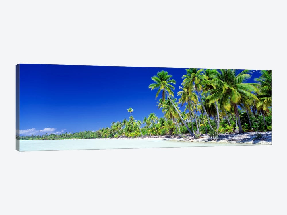 Palm Tree Laden Beach, Bora Bora, Society Islands, French Polynesia by Panoramic Images 1-piece Canvas Wall Art