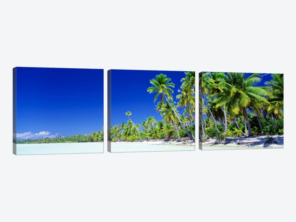 Palm Tree Laden Beach, Bora Bora, Society Islands, French Polynesia by Panoramic Images 3-piece Canvas Art
