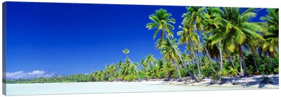 Palm Tree Laden Beach, Bora Bora, Society Islands, French Polynesia Canvas Art Print