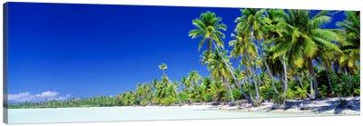Palm Tree Laden Beach, Bora Bora, Society Islands, French Polynesia Canvas Art Print