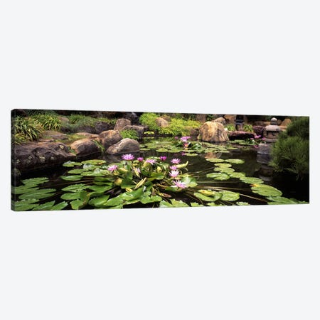 Lotus blossoms, Japanese Garden, University of California, Los Angeles, California, USA Canvas Print #PIM10951} by Panoramic Images Canvas Artwork