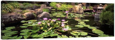 Lotus blossoms, Japanese Garden, University of California, Los Angeles, California, USA Canvas Print #PIM10951