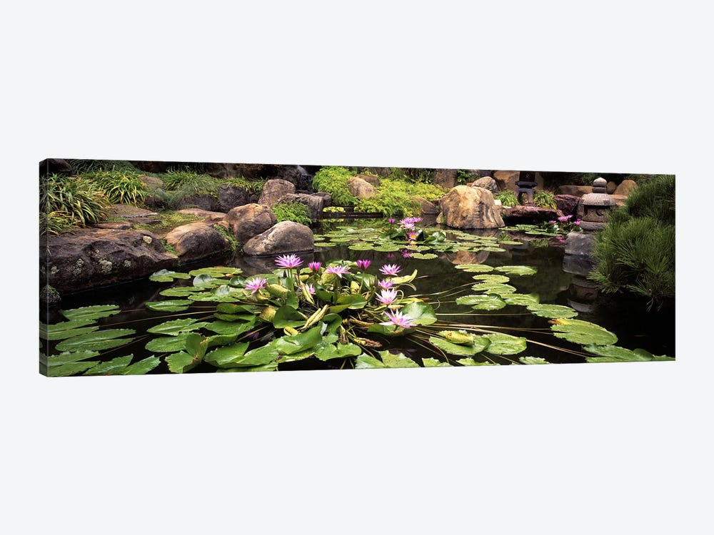 Lotus blossoms, Japanese Garden, University of California, Los Angeles, California, USA 1-piece Canvas Artwork