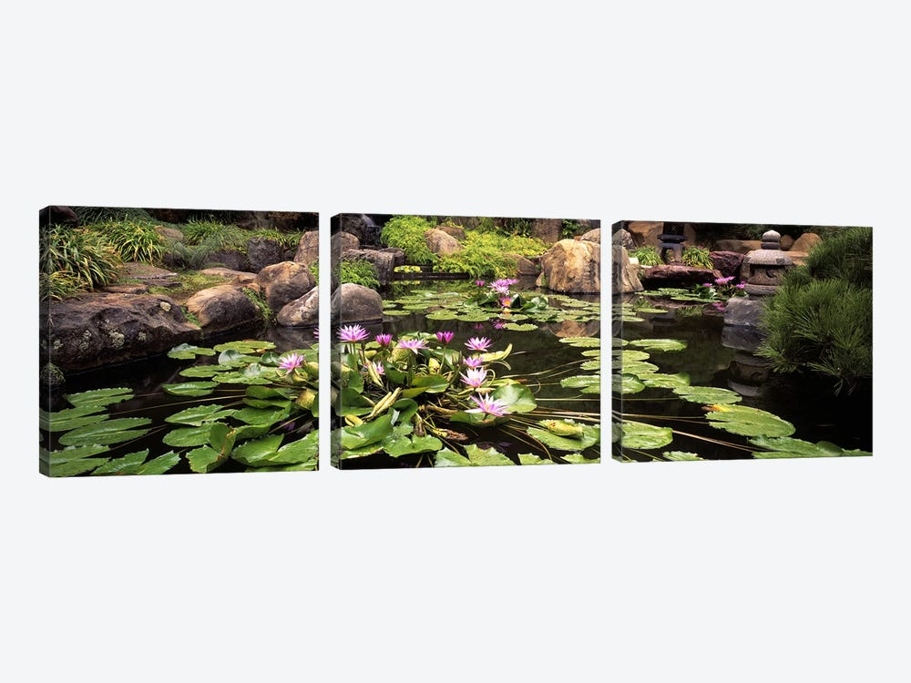 Lotus blossoms, Japanese Garden, University of California, Los Angeles, California, USA by Panoramic Images 3-piece Canvas Wall Art