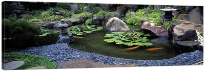 Lotus blossoms, Japanese Garden, University of California, Los Angeles, California, USA #2 Canvas Print #PIM10952