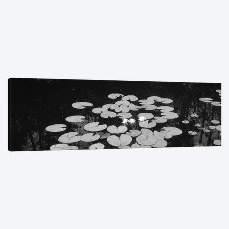 High angle view of water lilies in a lake, Suwannee Canal, Okefenokee National Wildlife Refuge, Georgia, USA Canvas Print #PIM11006} by Panoramic Images Canvas Wall Art