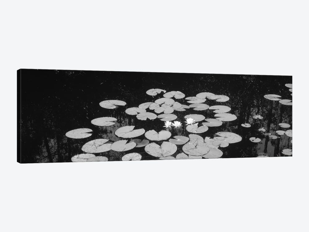High angle view of water lilies in a lake, Suwannee Canal, Okefenokee National Wildlife Refuge, Georgia, USA by Panoramic Images 1-piece Canvas Art