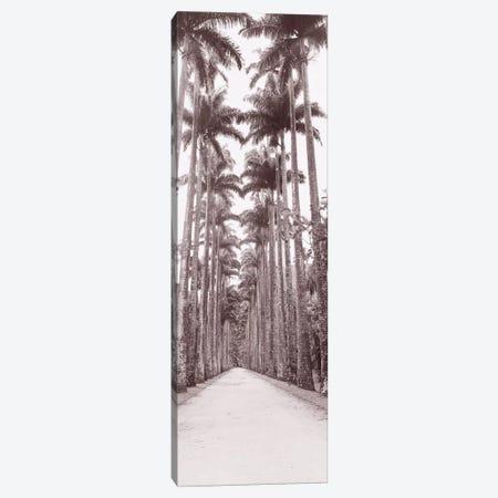 Garden Path, Rio De Janeiro, Brazil Canvas Print #PIM11050} by Panoramic Images Canvas Artwork
