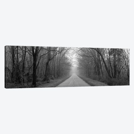 Foggy Tree Lined Road Illinois USA Canvas Print #PIM11151} by Panoramic Images Canvas Print