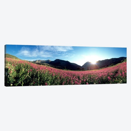 Albion Basin UT USA Canvas Print #PIM1117} by Panoramic Images Canvas Artwork