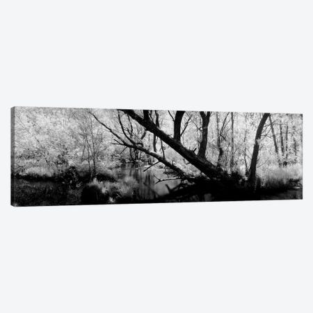 USA, Wisconsin, Stream of water flowing through a forest Canvas Print #PIM11183} by Panoramic Images Canvas Art