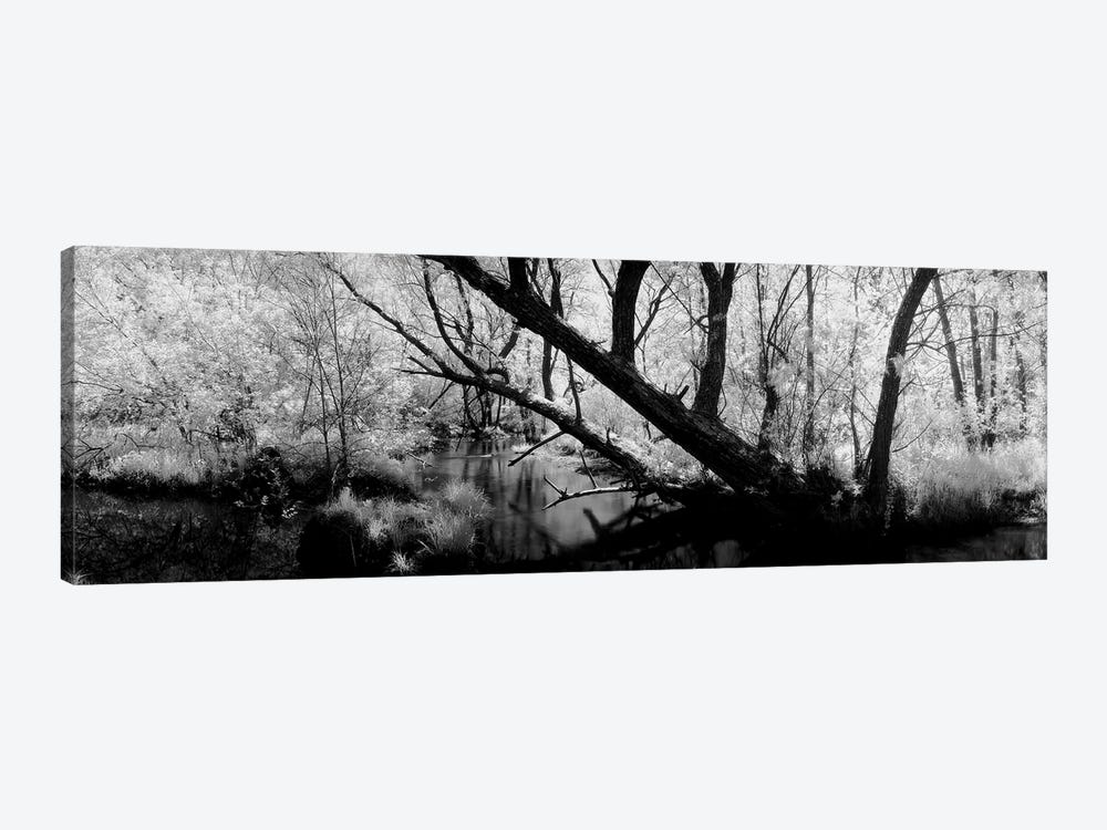 USA, Wisconsin, Stream of water flowing through a forest by Panoramic Images 1-piece Canvas Artwork