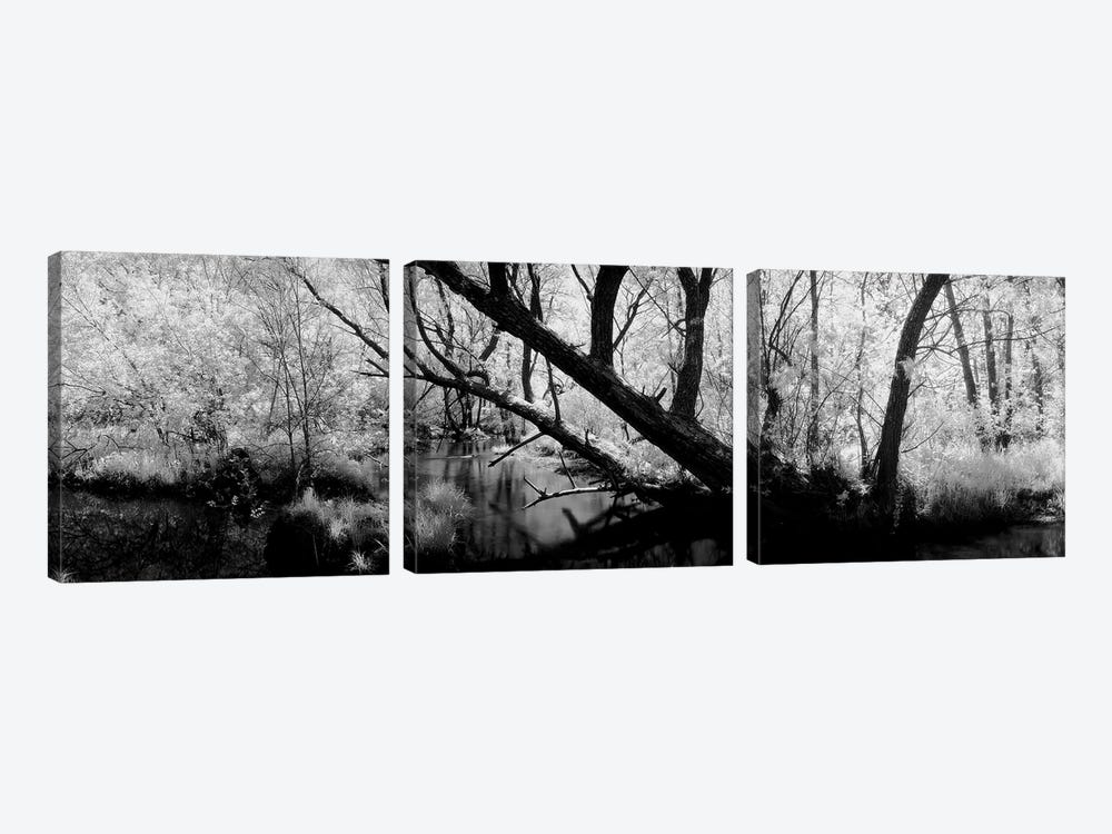 USA, Wisconsin, Stream of water flowing through a forest by Panoramic Images 3-piece Canvas Art