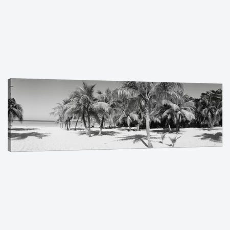 Palm Trees On The Beach In B&W, Negril, Jamaica Canvas Print #PIM11188} by Panoramic Images Canvas Artwork